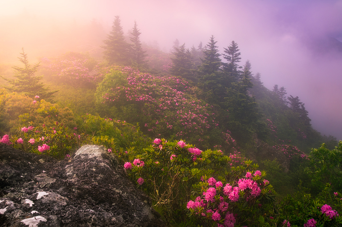 Asheville Spring Rhododendron Tours
