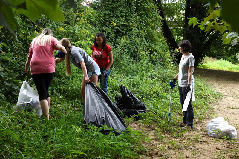 Forest Clean-up